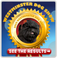 Westminster Dog Show 2013