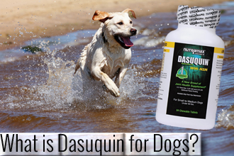 What is Dasuquin for Dogs?