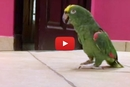 What This Bird Does After He Sneaks Through The Door Is Too Funny!