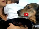 What This Rescue Dog Did to Save a Dying Baby is Simply Amazing!