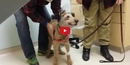 When This Blind Dog Sees His Owners for the First Time- It's Too Touching!!