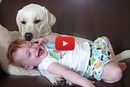 When This Dog Licks His Family's Tiniest Human, Something Adorable Happens!