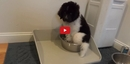 When This Puppy Gets A New Bowl- He Doesn't Know How to React! What He Does Is Too Precious!!