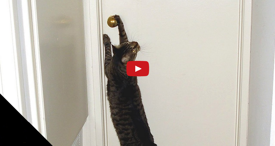 Who let the Dogs IN?? Watch These Cats Open Doors for Dogs!!
