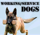 Working / Service Dogs