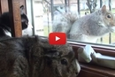 You'll Never Guess What This Cat And Guinea Pig See Outside