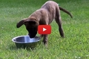 You Have To See What This Puppy Does With His Water! We Laughed!