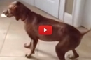 You Wont Believe What This Dog Steals From The Bathroom!