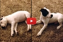 You Wont Believe What Wakes This Puppy Up!
