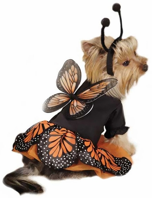 Zack & Zoey Monarch Butterfly Costume - LARGE