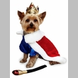Zack & Zoey Royal Pup Halloween Costume - MEDIUM