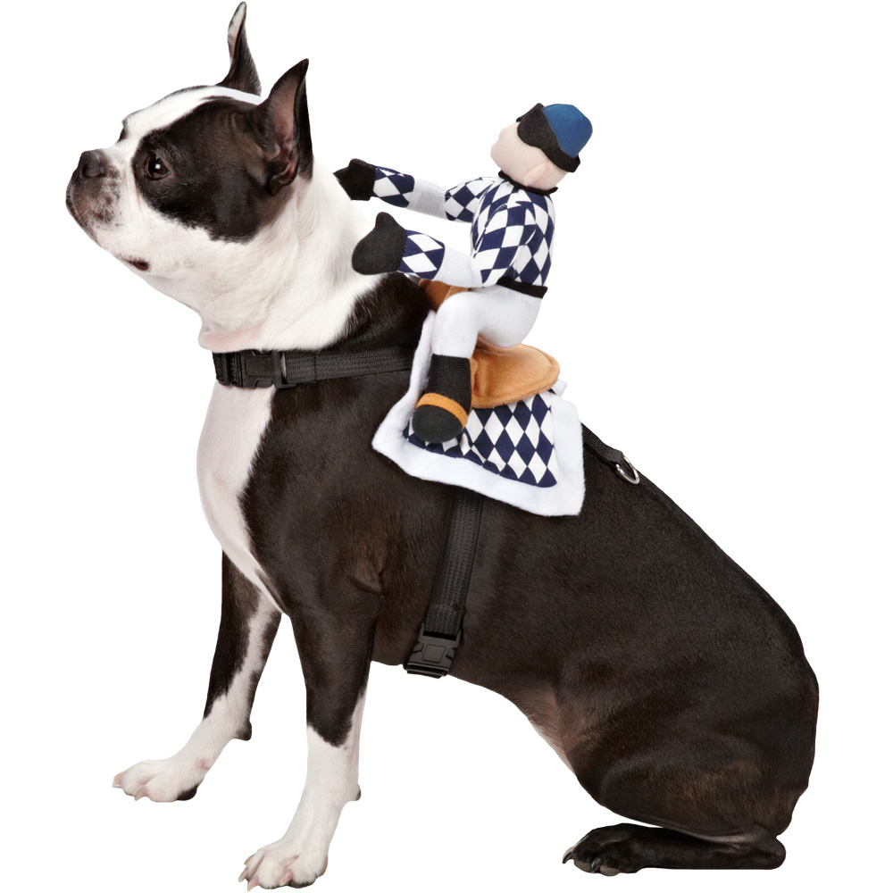 zack   zoey show jockey saddle costume medium entirelypets veterinaria pet house jockey plaza pet house jockey horario