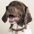 Zanies Jingle Bell Collars GREEN for DOGS - 20in