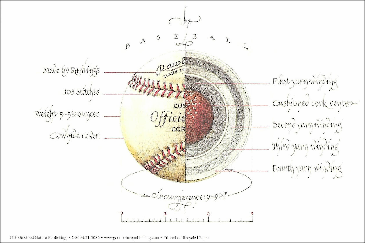 """Anatomy of Baseball"" 18x24 Poster"