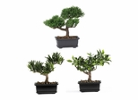 """8.5"""" Bonsai Silk Plant Collection (Set of 3) in Green - Nearly Natural - 4122"""