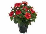 Hibiscus with Black Hexagon Vase Silk Plant - Nearly Natural - 6691