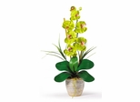Phalaenopsis Silk Orchid Flower Arrangement in Green - Nearly Natural - 1016-GR