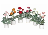 Ranunculus with White Vase (Set of 6) in Mixed - Nearly Natural - 4601