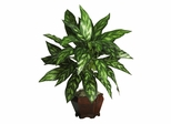 Silver King with Wood Vase Silk Plant in Green - Nearly Natural - 6617