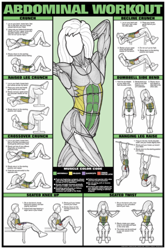Abdominal Workout Poster - Laminated