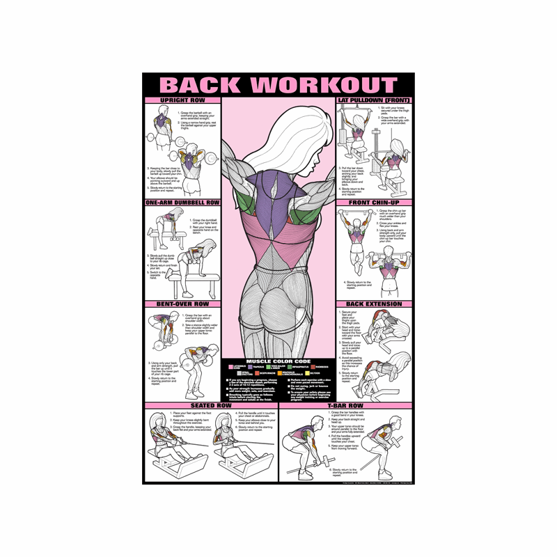 c56295d63db Back Workout Poster - Laminated