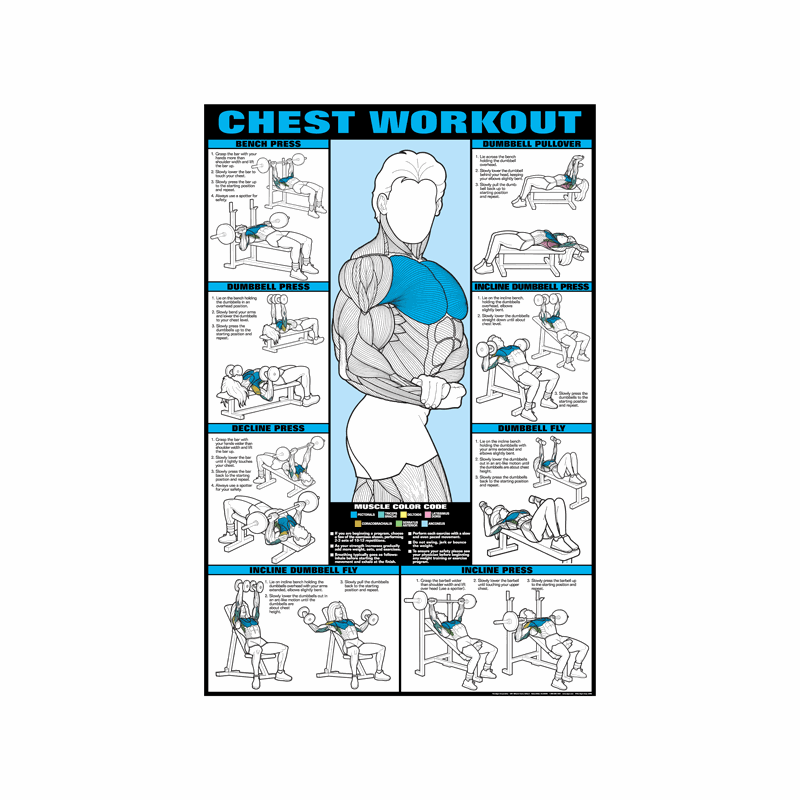 Chest Workout Poster Laminated