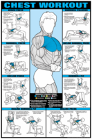 Chest Workout Poster - Laminated $29.99