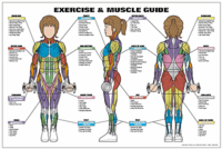 Exericse & Muscle Guide - Female $29.99