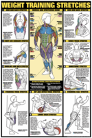 Weight Training Stretches Poster - Laminated