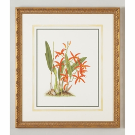 380299 Chelsea House Lelia Cinnabarina-Water Color On Paper Gold Frame, Water Color Wash