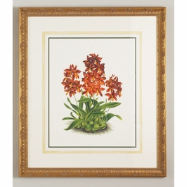 380300 Chelsea House Epidendrum Vitellinu-Water Color On Paper Gold Frame, Water Color Wash