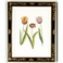 380353 Chelsea House Tulip/Decorative Frame (988)