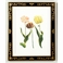380355 Chelsea House Tulip/Decorative Frame (985)