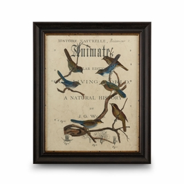 386134 Chelsea House Vintage Ornithology II-Embellished Print Distressed Brown Frame With Gold