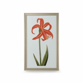 386390 Chelsea House Tiger Lily II