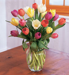 20 Dutch Tulips in vase
