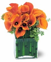 Orange CALLA LILLYS imported from new zeland in square vase