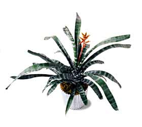 The FTD® Bromeliad Plant