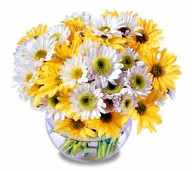 The FTD® Fresh As A Daisy™ Arrangement