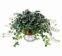 The FTD® Ivy Wire Basket