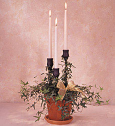 Triple Candle with Ivy