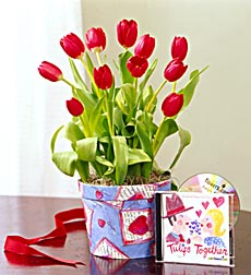 Tulips for Lovers