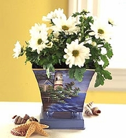 White Mum Plant in Lighthouse Planter