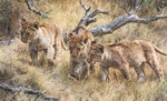 "Carl Brenders Hand Signed and Numbered Limited Edition Canvas Giclee:""The Wanderers"""