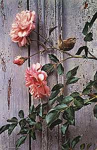 "Carl Brenders Hand Signed and Numbered Limited Edition Giclee on Canvas: ""Summer Roses - Winter Wren"""