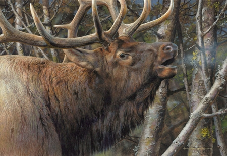 "Carl Brenders  Hand Signed and Numbered Limited Edition Print and Canvas Giclee: ""Mating Call - Bull Elk"""