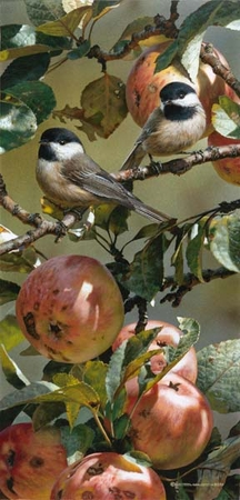 "Carl Brenders Handsigned and Numbered Limited Edition Print:""Chickadees and Apple Tree"""