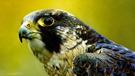 "Carl Brenders Limited Edition Print:""Peregrine Falcon Portrait"""