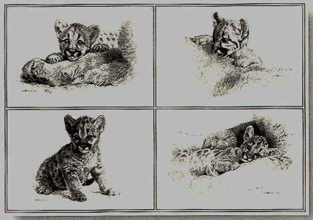 """Carl Brenders Limited Edition Print:""""Rocky Camp Cubs-Pencil Drawings"""""""