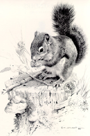 """Carl Brenders Limited Edition Print:""""Squirrel's Dish"""""""